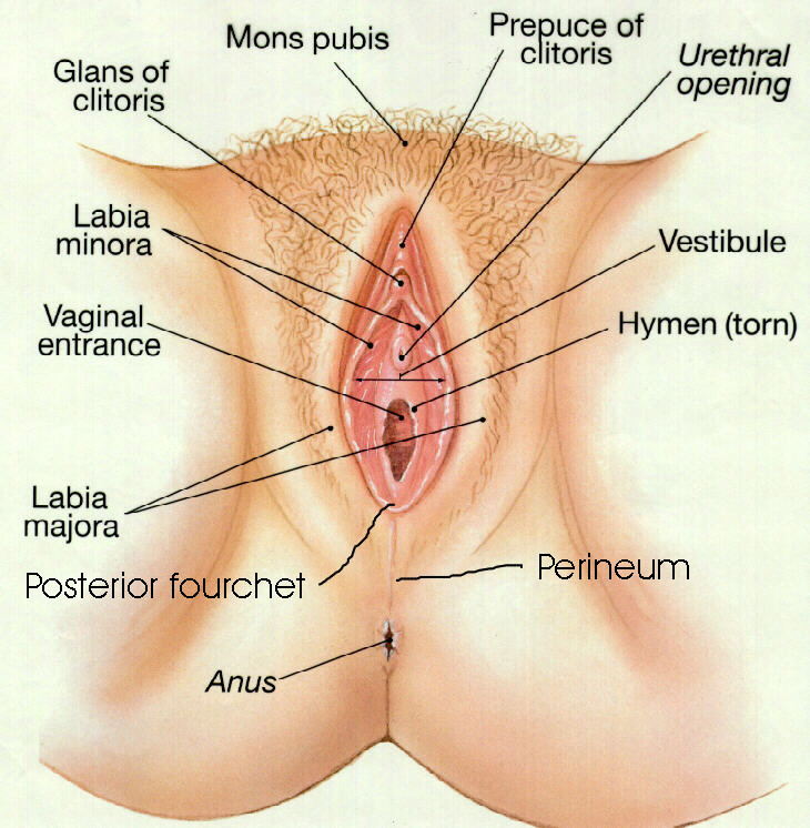 Female External Sexual Anatomy